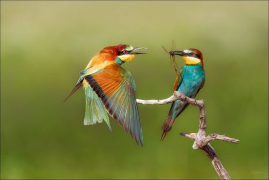 Makroaufnahme zwei Vögel