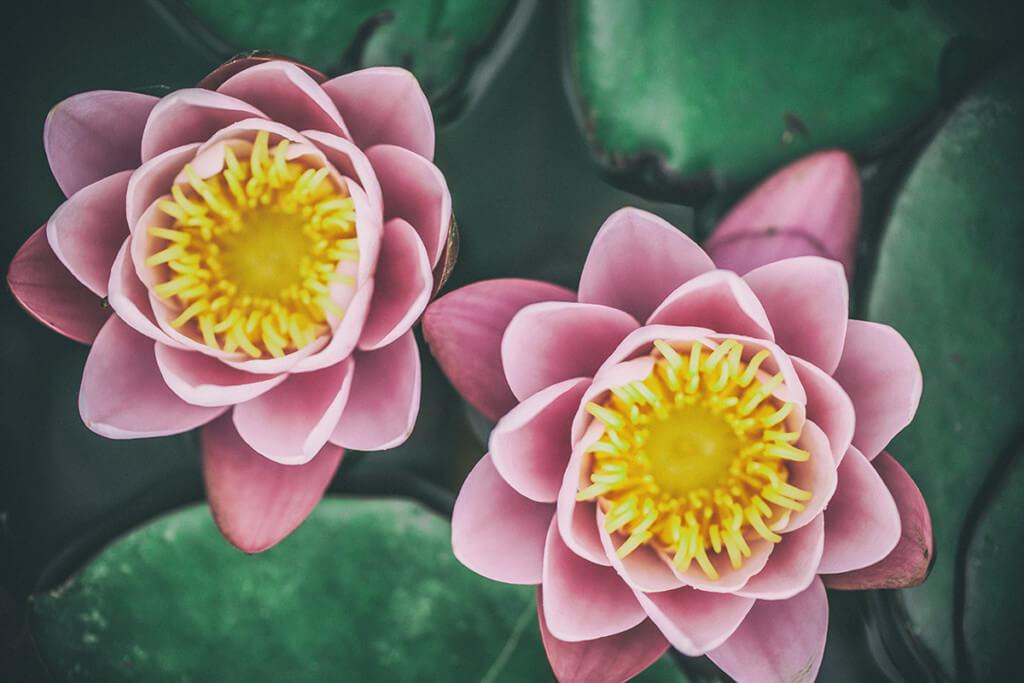 Aufnahme von zwei Blumen