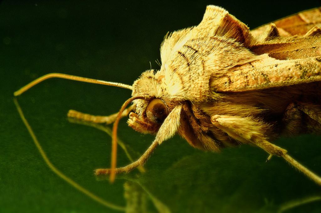 Insektenfotografie