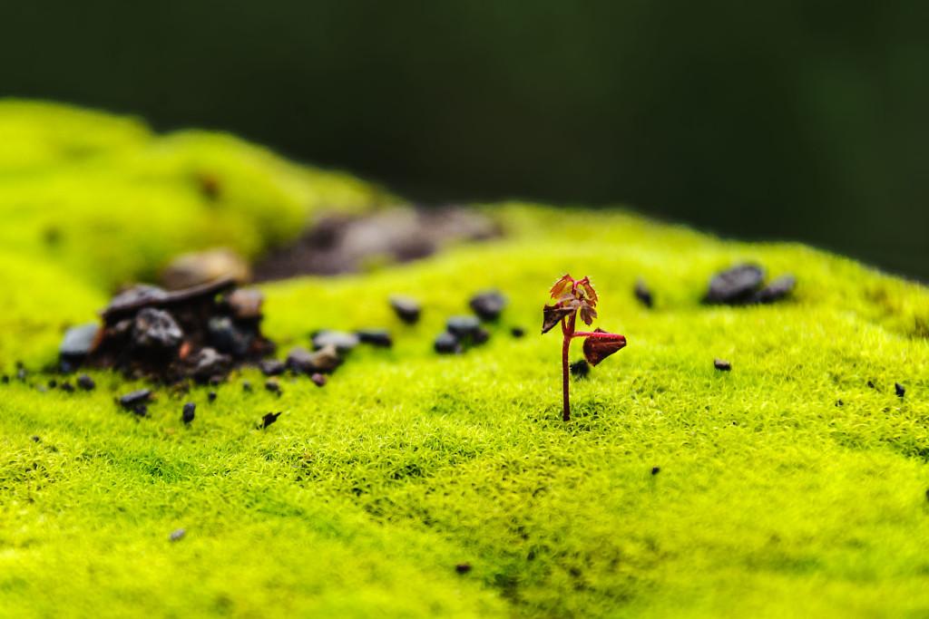 Naturfoto Makro