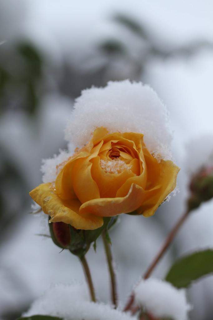 Schnee – zu geringe Korrektur