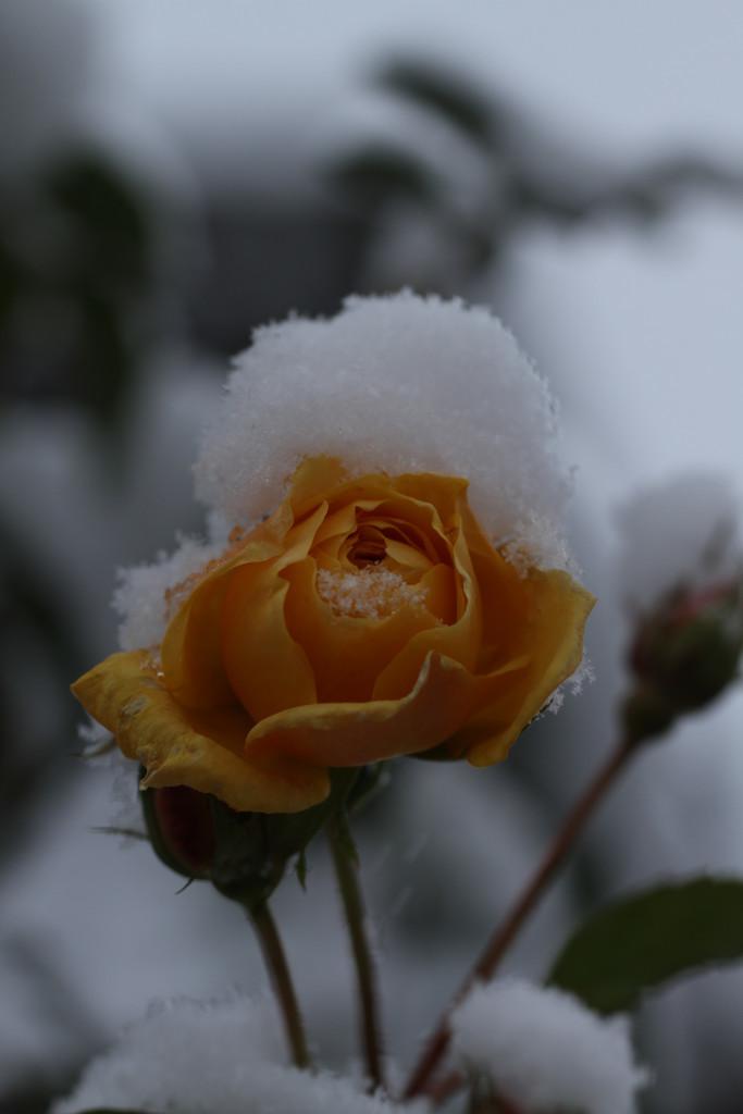 Schnee – dunkel