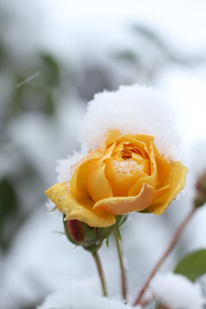 Schnee – weiß