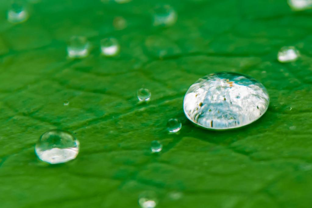Wassertropfen – Seerose