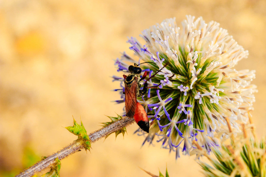 insektenfoto