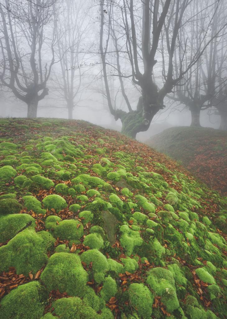 Naturfotografie: wald-nordspanien