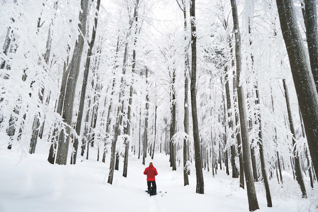 winter-wald