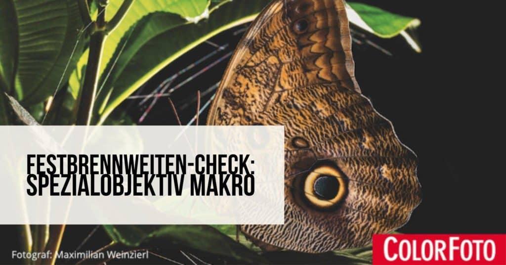 Festbrennweiten-Check: Spezialobjektiv Makro