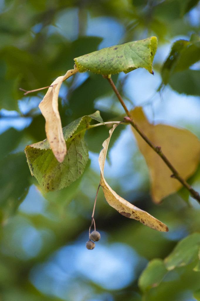 Herbst-Baeume-1