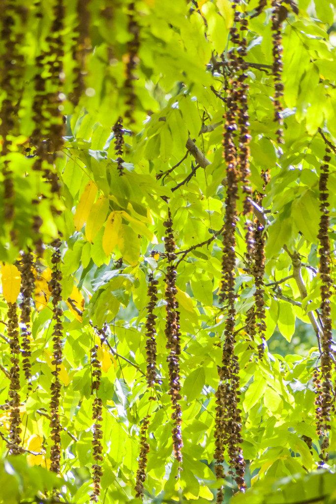 Herbst-Baeume-2