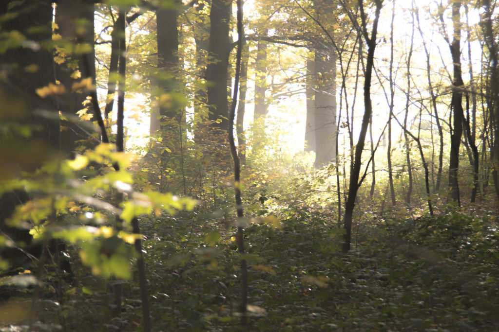 Herbst-Wald