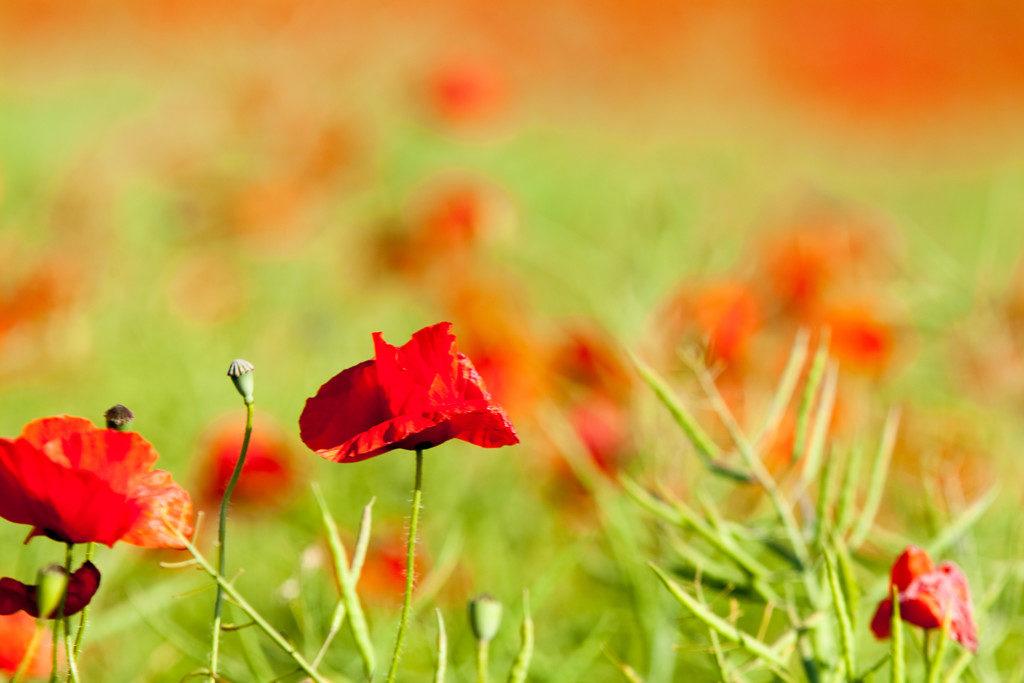 Landschaftsfotografie: Wiese mit Blüten Nahaufnahme Makro