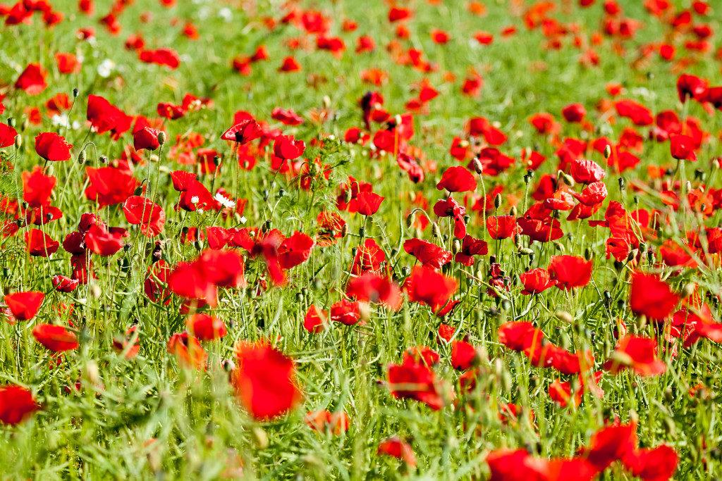 Landschaftsfotografie: Wiese mit Blüten