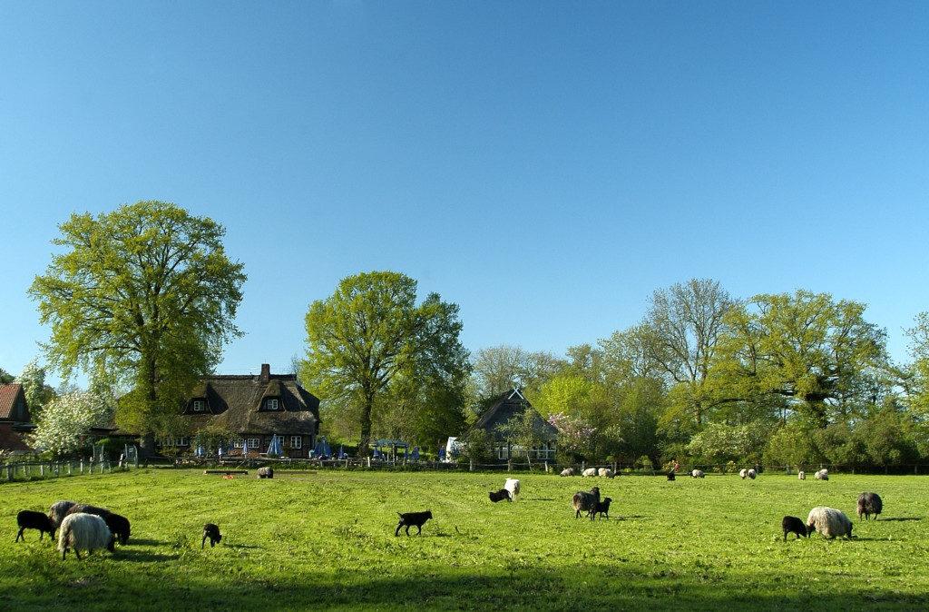 Landschaftsfotografie: Kühe auf Wiese
