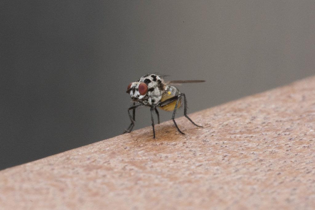 makro-insekt-herbst