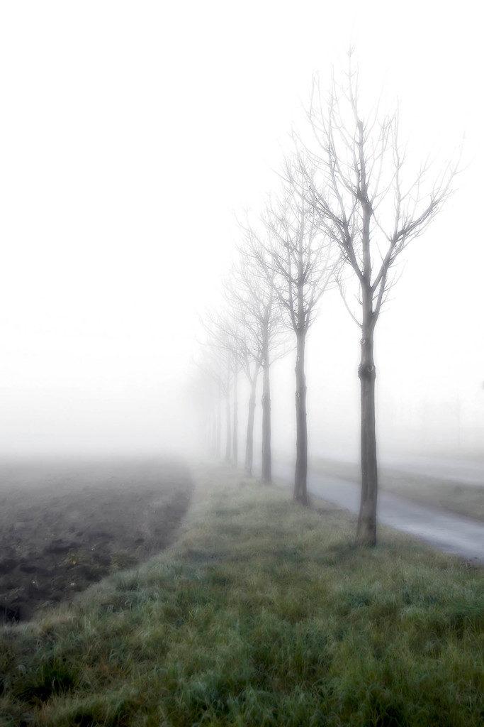 straßenrand-nebel