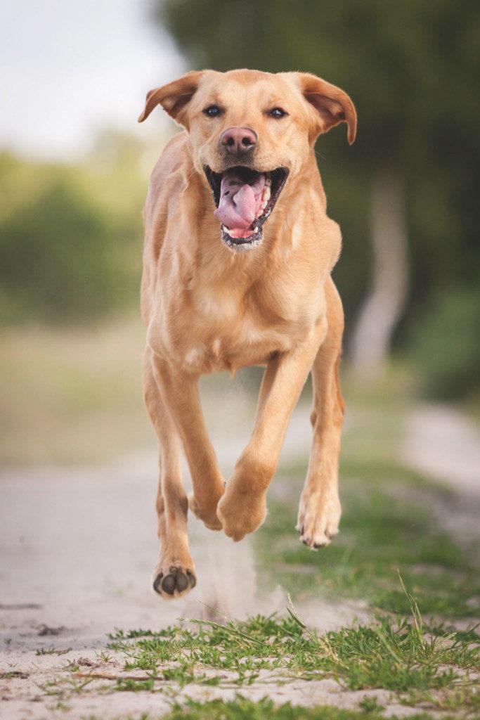 Tierfotografie: Hunderennen