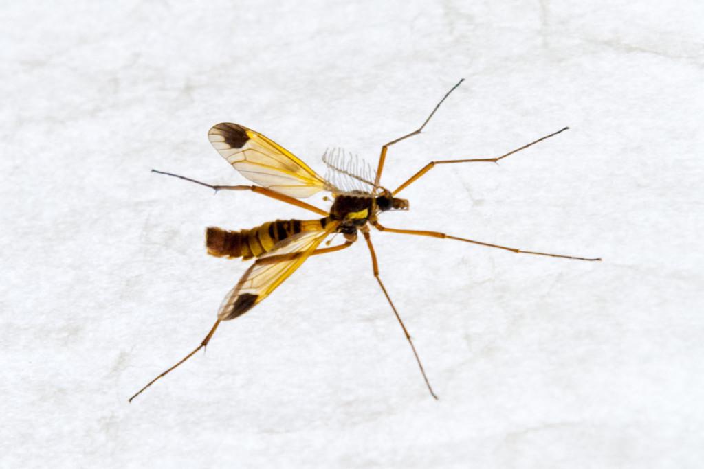 Makrofotografie: Ein Insekt sitzt auf einer grauen Lampe