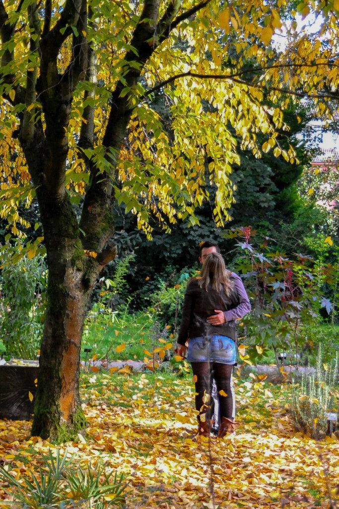 Mischlicht-Herbst-2