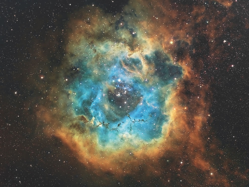 Objekt: NGC 2244, der Rosettennebel in der Hubblepalette, Ha=G, SII=R, OIII=B; Belichtung: 35*20 min Ha, je 22*20min OIII, 20*20 min SII; Optik: William Optics Megrez 72; Kamera: Moravian G2 8300 FW bei -20 °C; Montierung: Losmandy G11 – FS-2; Bildbearbeitung: PixInsight und Photoshop CS5. Fotograf: Bernd Weinzierl