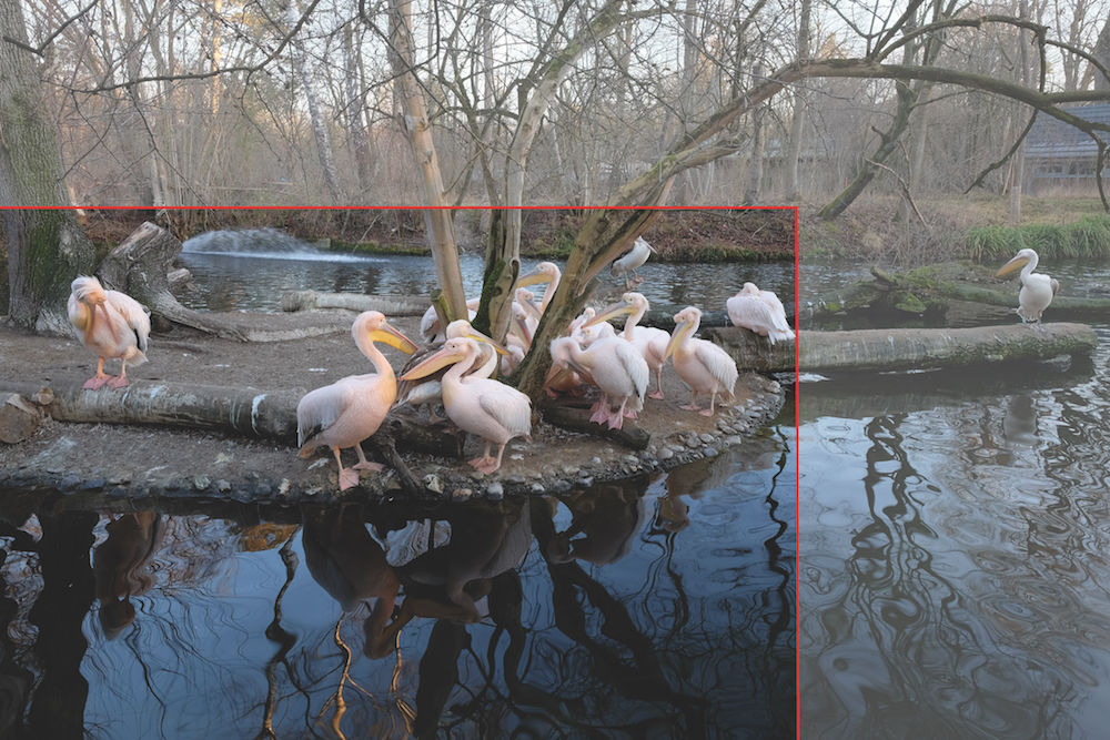 Tierfotografie: Pelikane Ausschnittkorrektur