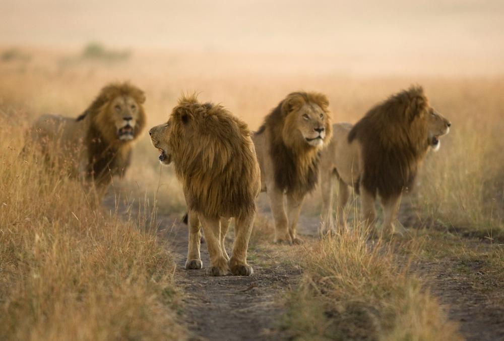 Tierfotografie: kostenloses eBook