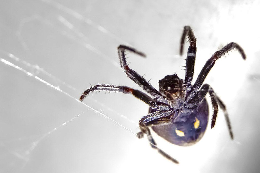 Makrofotografie: Spinne von unten