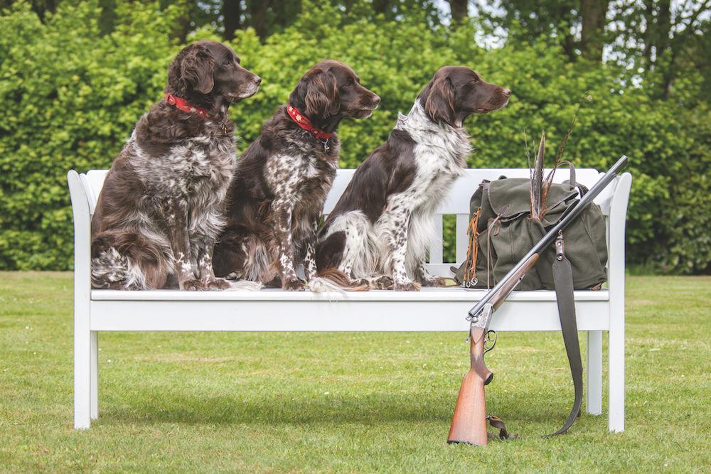 Tierfotografie: Hunde fotografieren