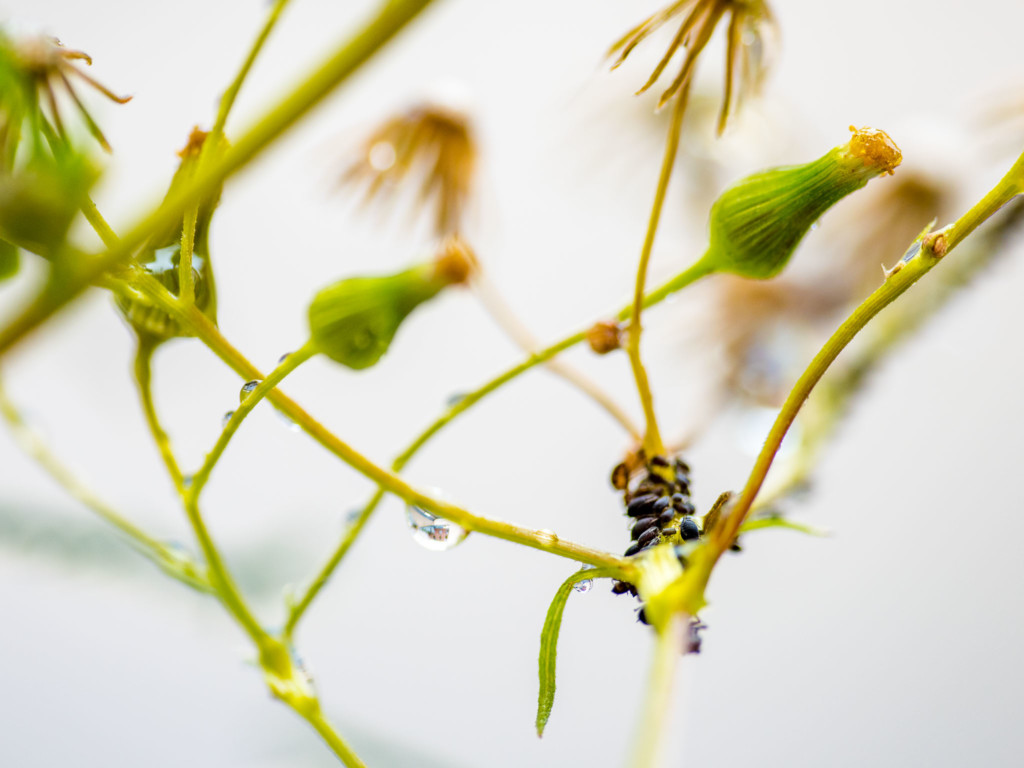 makrofotografie pflanzen im richtigen licht fotoschule. Black Bedroom Furniture Sets. Home Design Ideas
