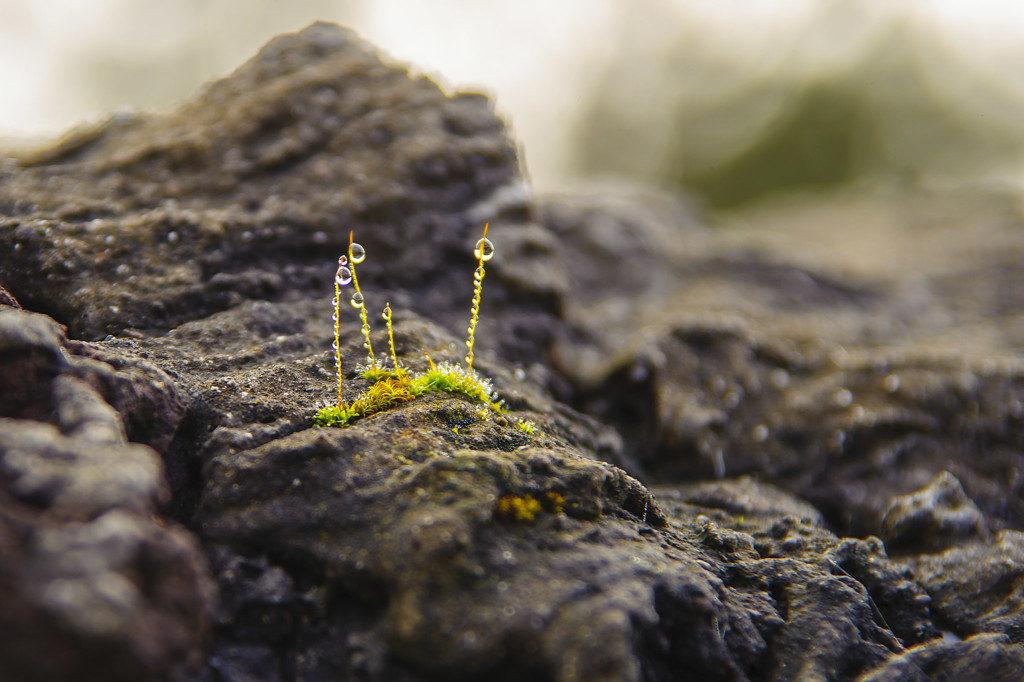 mikrolandschaften-1