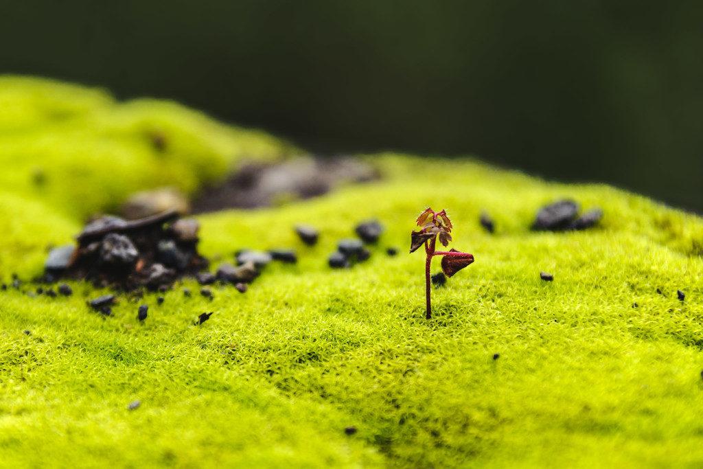 mikrolandschaften