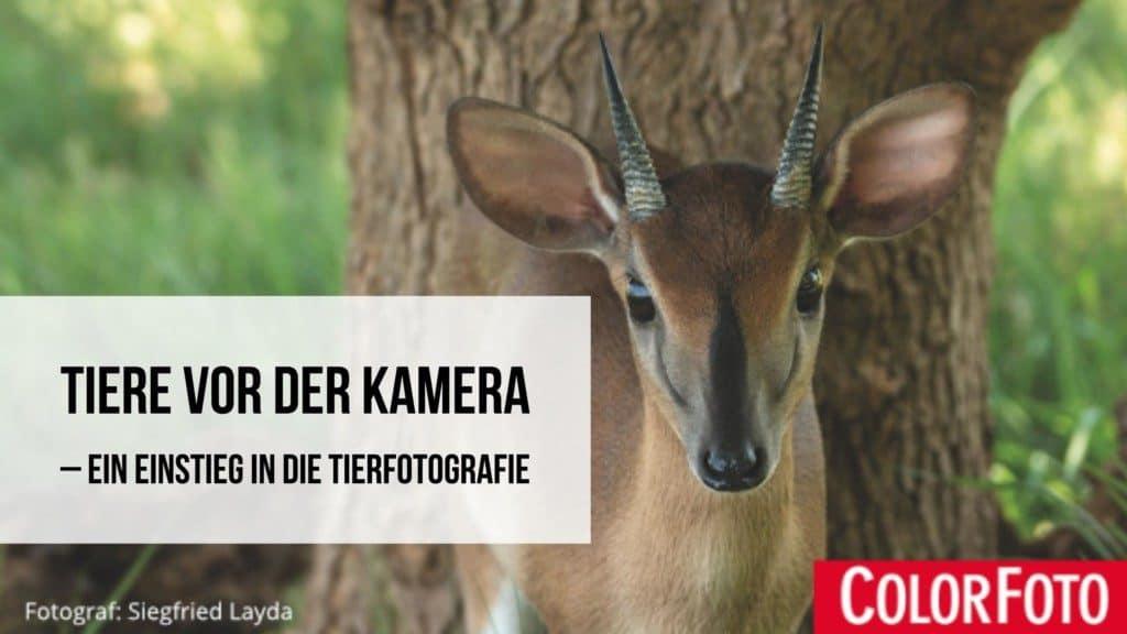 Tiere vor der Kamera: Ein Einstieg in die Tierfotografie