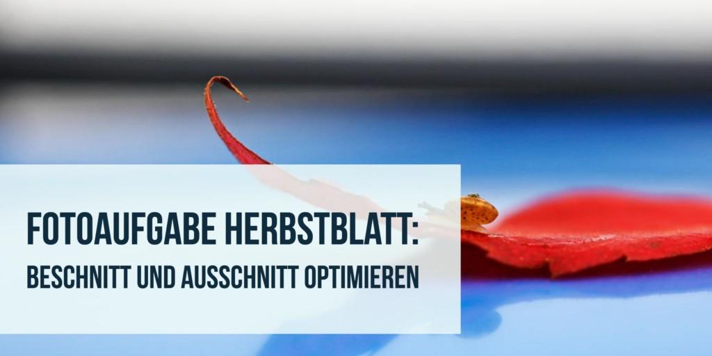 Fotoaufgabe Herbstblatt: Beschnitt und Ausschnitt optimieren