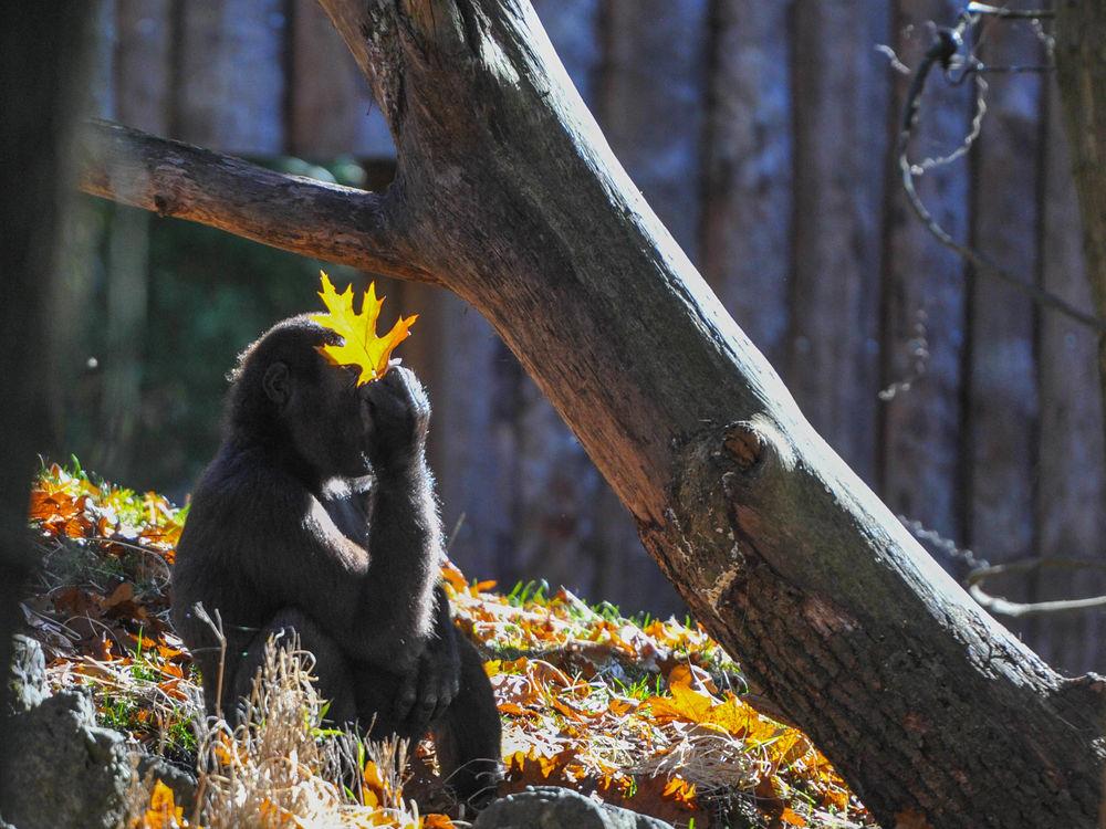 Herbstblatt von gunlady sp