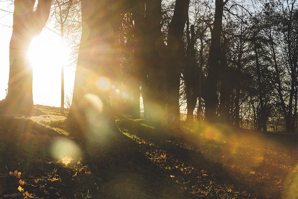 tiefstehende-oktobersonne