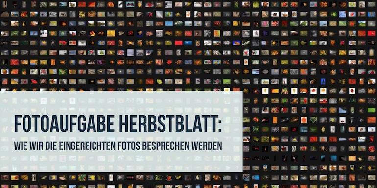 Fotoaufgabe Herbstblatt: Wie wir die eingereichten Fotos besprechen werden