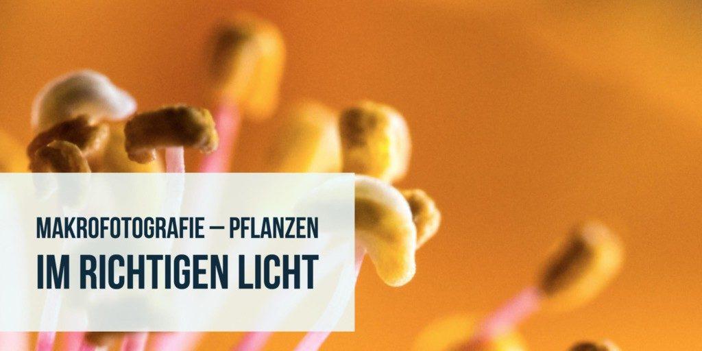 Makrofotografie – Pflanzen im richtigen Licht