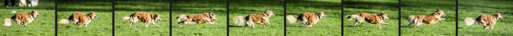 Fotoserie: Hund rennt