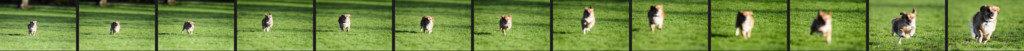 Fotoserie: Hund rennt auf Kamera zu
