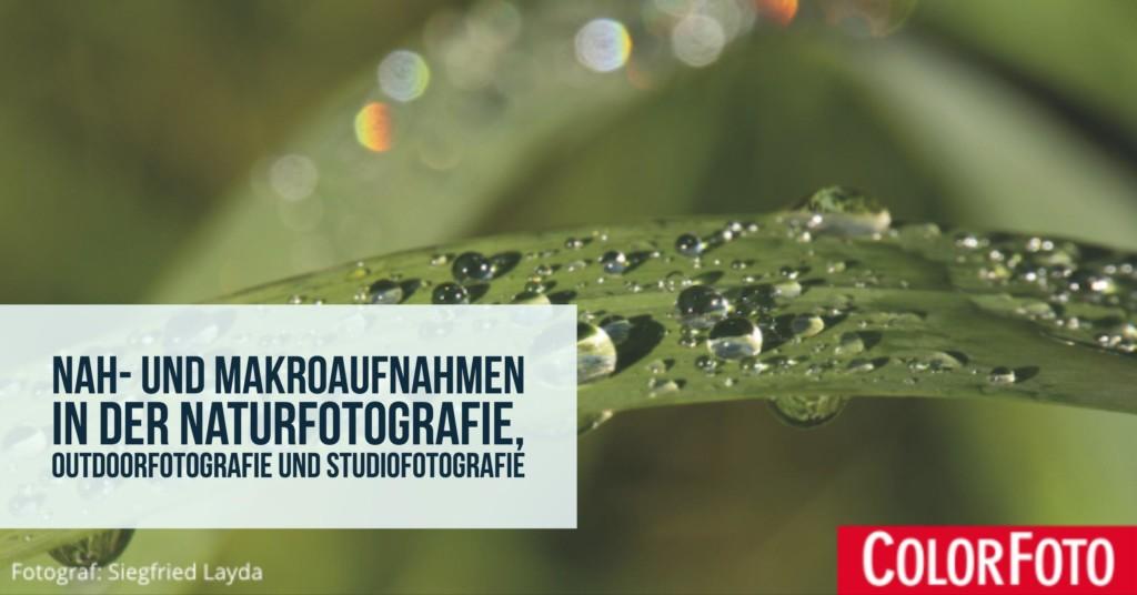 Nah- und Makroaufnahmen in der Naturfotografie, Outdoorfotografie und Studiofotografie
