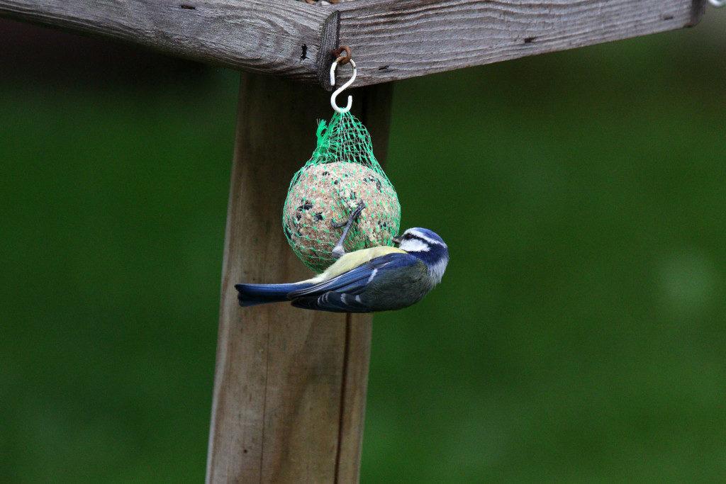 Vögel. Bild 1