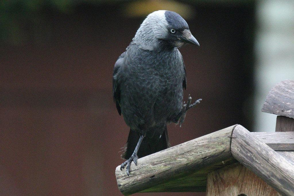 Vögel. Bild 3