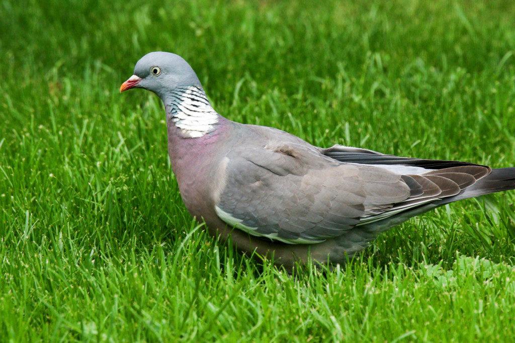 Vögel. Bild 6