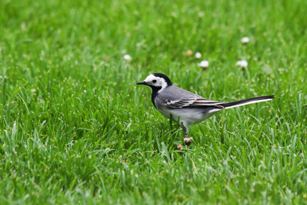 Vögel. Bild 7