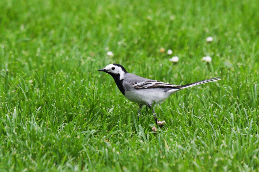 Vögel. Bild 8