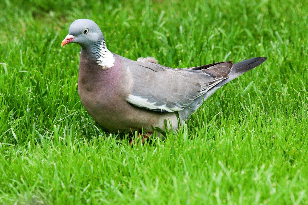 Vögel. Bild 5