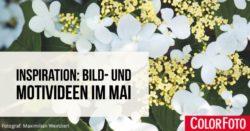 bild-und-motivideen-im-mai