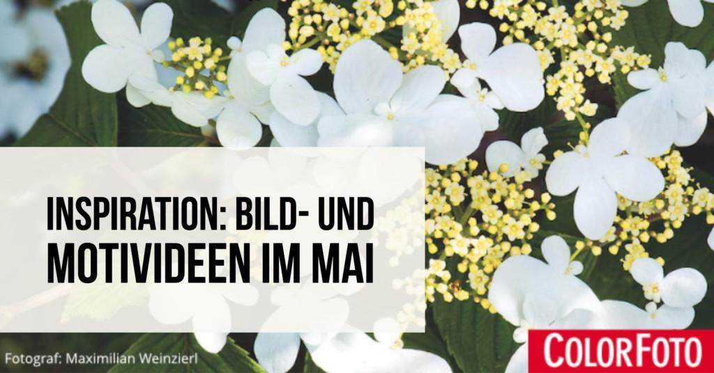 Inspiration: Bild- und Motivideen im Mai