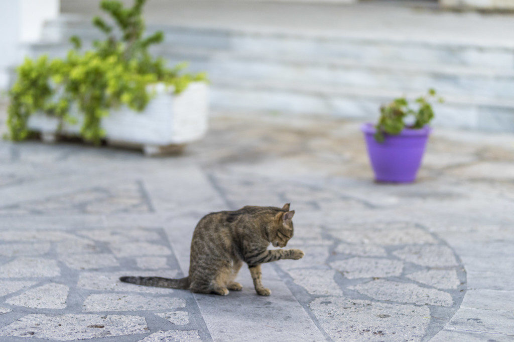 Katze putzt sich