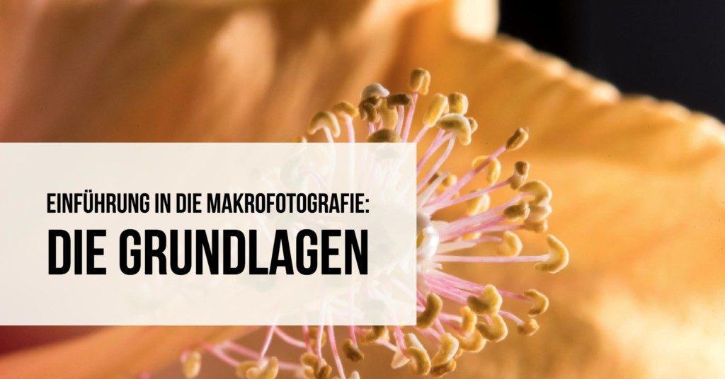 Einführung in die Makrofotografie: Die Grundlagen